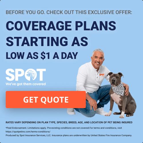 Compare Pet Insurance Companies | Top Pet Insurance