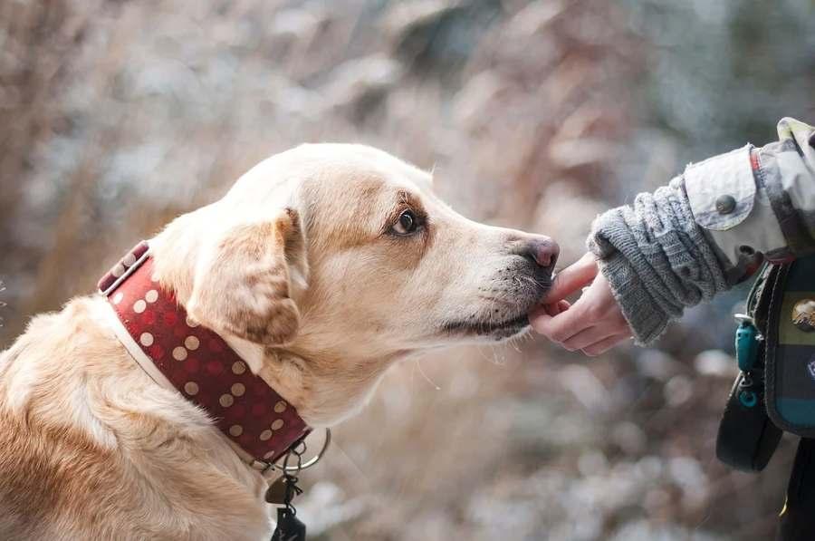 Understanding Pet Insurance