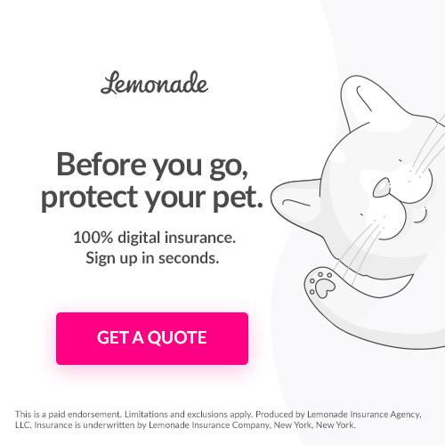 large-lemonade pet exit pop