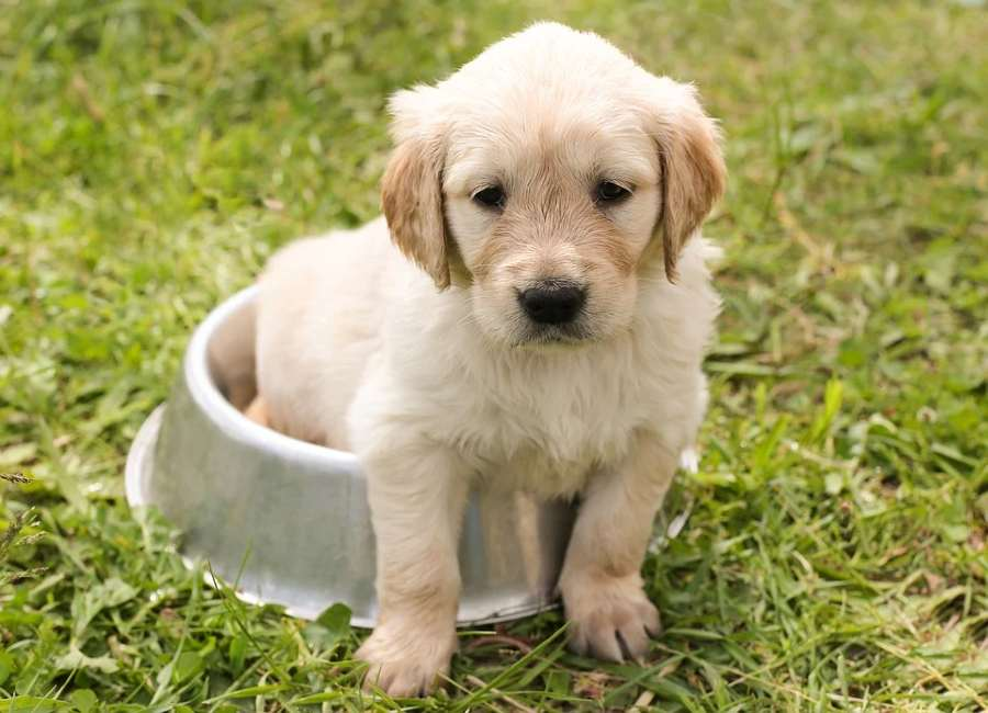 pet insurance - things you need to know