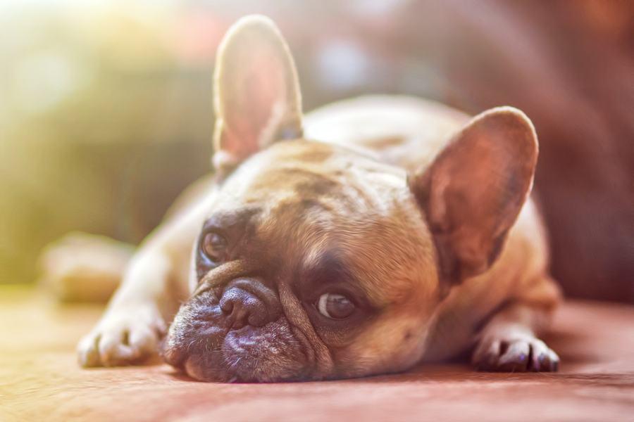 pet insurance - tips